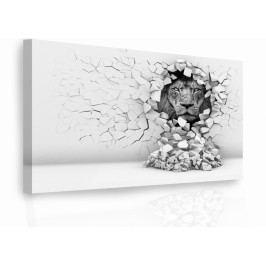 Luxusní obraz - lev ve stěně (150x100 cm) - InSmile ®