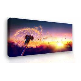 Obraz - pampeliška v zapadajícím slunci (150x100 cm) - InSmile ®