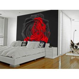 Tapeta proměna růže (150x116 cm) - Murando DeLuxe