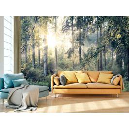 Fototapeta lesní pohoda (150x105 cm) - Murando DeLuxe