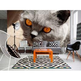 Tapety zvířata - Kočka (150x105 cm) - Murando DeLuxe