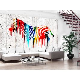 Duhová zebra (150x105 cm) - Murando DeLuxe