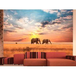 Sloni v savaně (150x116 cm) - Murando DeLuxe