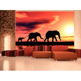 Sloní rodina (150x116 cm) - Murando DeLuxe