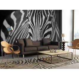Tapeta zebra (150x116 cm) - Murando DeLuxe