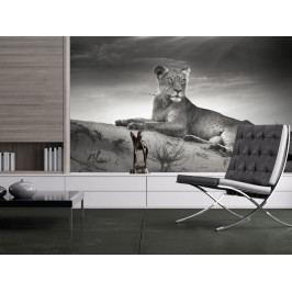 Fototapeta - Šelma v odstínech šedi (150x116 cm) - Murando DeLuxe