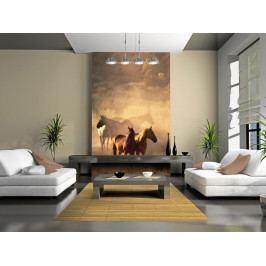 Tapeta koně ve stepi (150x116 cm) - Murando DeLuxe