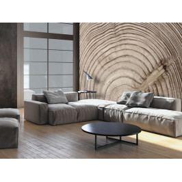 Tapeta letokruhy dřeva (150x105 cm) - Murando DeLuxe