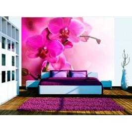 Fototapeta působivá orchidej (150x116 cm) - Murando DeLuxe