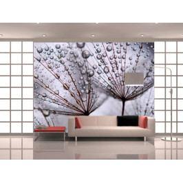 Fototapeta- Ranní rosa (150x116 cm) - Murando DeLuxe