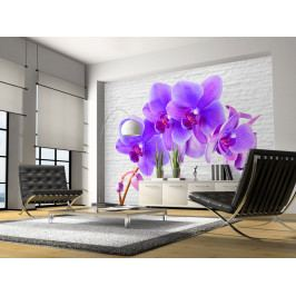 Fototapeta lila orchidej (150x105 cm) - Murando DeLuxe