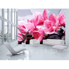 Fototapeta Orchidej - lávové kameny (150x116 cm) - Murando DeLuxe