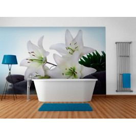 Fototapeta - bílá lilie (150x116 cm) - Murando DeLuxe