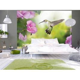 Fototapeta kolibřík (150x105 cm) - Murando DeLuxe