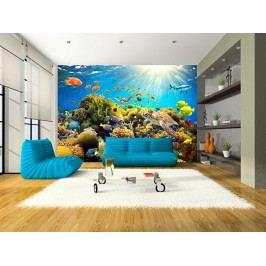 Fototapeta podvodní svět (150x105 cm) - Murando DeLuxe