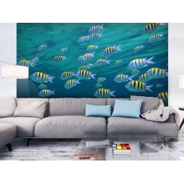 Tapety zvířata - Rybičky v oceánu (150x116 cm) - Murando DeLuxe