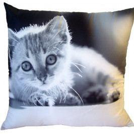 Dadka Fotopolštářek černobílé kotě 40x40 cm