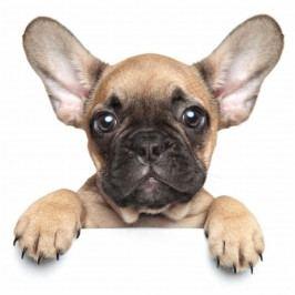 Mikroflanelová dětská deka Puppy bulldog 120x150 cm