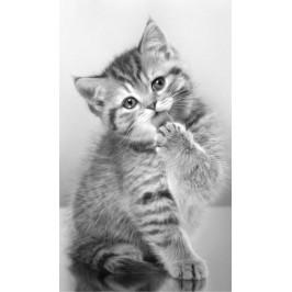 Detexpol dětský froté ručník Cat 04 30x50 cm