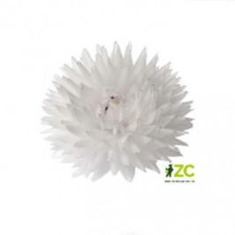 Jiřina vosková malá bílá