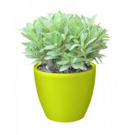 G21 31894 Samozavlažovací květináč  Ring mini zelený 15cm