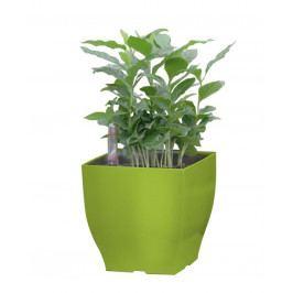 G21 Cube mini Samozavlažovací květináč zelený 13.5cm