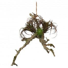 Rostlina Umělá Sukkulente Auf Ast I