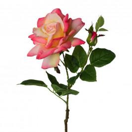 Růže 3020140ce-10
