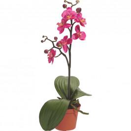 ORCHIDEJ orchidej - zelená, pink