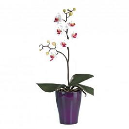 ORCHIDEJ orchidej - zelená, bílá