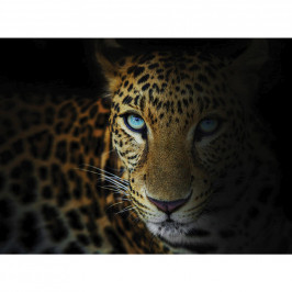 OBRAZ NA PLÁTNĚ, zvířata, 135/100 cm - černá, bílá