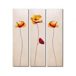 Obrazový set - Květy