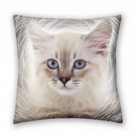 Halantex Polštářek Animals Cat grey, 40 x 40 cm