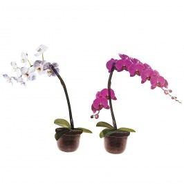Samolepicí dekorace Orchidea