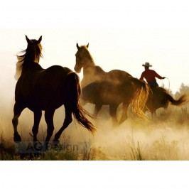 Fototapeta koně 270 x 360 cm, Hornschuch