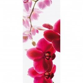 Fototapeta Orchidea, 95 x 210 cm