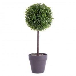 Buxusový strom v květináči černá, 22 cm