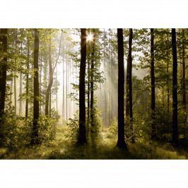 AG Art Fototapeta XXL Ranní les 360 x 270 cm, 4 díly