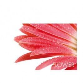 Prostírání PICTURE červený květ KELA KL-15039