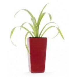 Samozavlažovací květináč Linea mini červený 26 cm