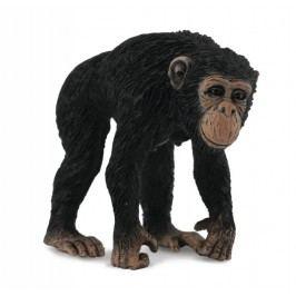 Collecte - Šimpanz - samice