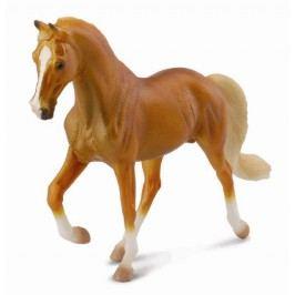 Collecte - Tennesse Jezdecký Kůň Hřebec Zlatý Palomino