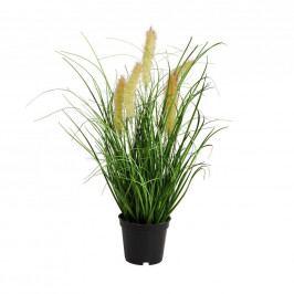 FLORISTA Sítina tráva v květináči 8 cm