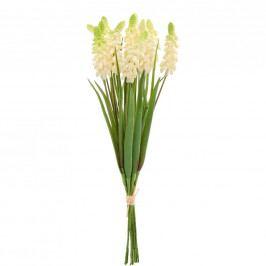 FLORISTA Hroznový hyacint, 12ks - krémová