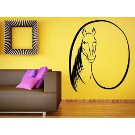 Samolepka na zeď Kůň 0331