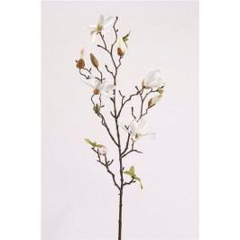 Emerald květiny - Magnólie Stellata, bílá, 75cm (416318)