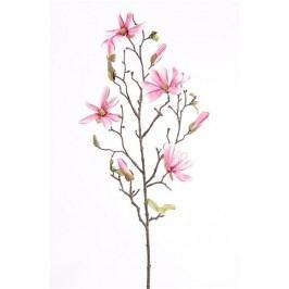 Emerald květiny - Magnólie Stellata, růžová, 75cm (416319)