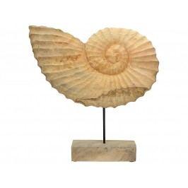 KERSTEN - Dekorace - mušle, dřevo přírodní, 49.5x9x53.5cm - (WER-2401)