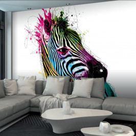 Velkoformátová tapeta Barevná zebra, 366x254cm