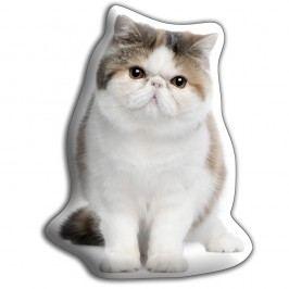Polštářek s potiskem Exotické krátkosrsté kočky AdorableCushions